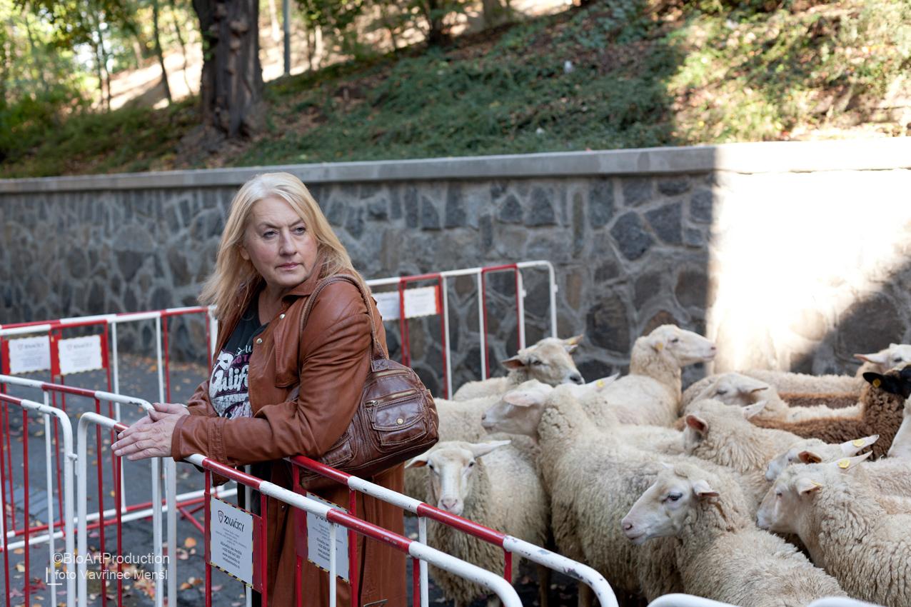 kosovo muslimské randěnígo ryby seznamka služba
